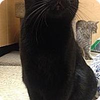 Adopt A Pet :: Saheykee - Monroe, GA