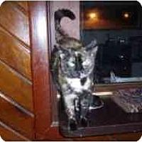 Adopt A Pet :: Firefly - Hamburg, NY