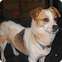 Adopt A Pet :: Buck - Conyers, GA