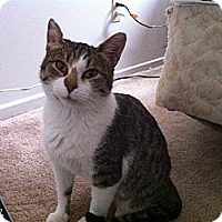 Adopt A Pet :: Chelsea - Douglas, ON