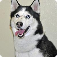 Adopt A Pet :: Max - Port Washington, NY