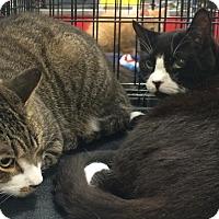 Adopt A Pet :: Brawny and Scott - Harrisburg, NC