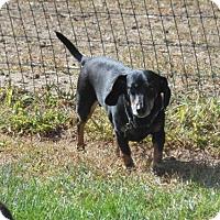 Adopt A Pet :: Bear - Wheatland, WY