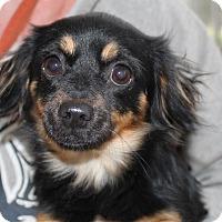 Adopt A Pet :: Becca - Hagerstown, MD