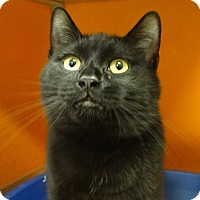 Adopt A Pet :: Princess - Elyria, OH