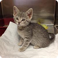 Adopt A Pet :: H-1 - Triadelphia, WV
