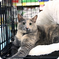 Adopt A Pet :: Maggie - Gainesville, VA