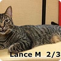 Adopt A Pet :: Lance - Brandon, FL