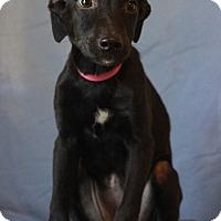 Adopt A Pet :: Lila - Waldorf, MD
