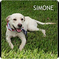 Adopt A Pet :: Simone - Houston, TX