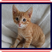 Adopt A Pet :: Stars - Mt. Prospect, IL