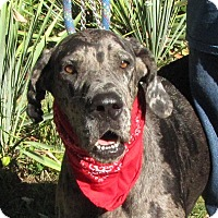 Adopt A Pet :: Pebbles - Oakland, AR