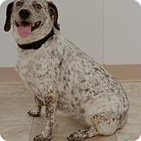 Adopt A Pet :: Mila - Urbana, OH