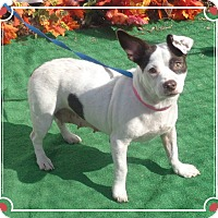 Adopt A Pet :: GEORGIA - Marietta, GA