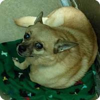 Adopt A Pet :: Flash - Claremore, OK