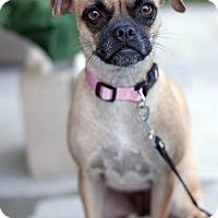 Adopt A Pet :: Nicole - San Diego, CA