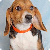 Adopt A Pet :: Leroy - Encinitas, CA