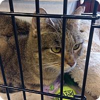 Adopt A Pet :: Mama June - Columbus, OH