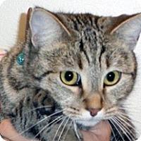 Adopt A Pet :: Sasha - Wildomar, CA