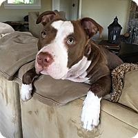 Adopt A Pet :: Sparkle - San Jose, CA