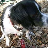 Adopt A Pet :: Oreo - Emory, TX