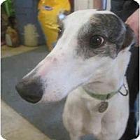 Adopt A Pet :: Mia (My Nay Nay) - Chagrin Falls, OH