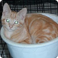 Adopt A Pet :: Cassius Clay - Pensacola, FL