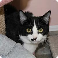 Adopt A Pet :: Rhonda St. #2 - Lunenburg, MA