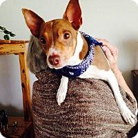 Adopt A Pet :: Tate In San Antonio - San Antonio, TX