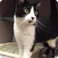 Adopt A Pet :: Oreo - Fort Dodge, IA