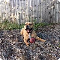 Adopt A Pet :: Coco - Red Wing, MN