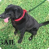 Adopt A Pet :: Gail - Batesville, AR