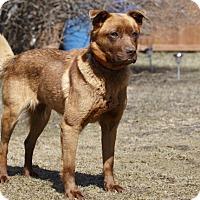 Adopt A Pet :: LOOTAH - Ile-Perrot, QC