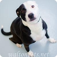 Adopt A Pet :: Sadie - Monroe, GA
