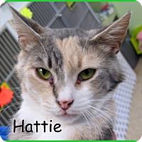 Adopt A Pet :: Hattie - Warren, PA