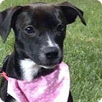 Adopt A Pet :: Chloe - Marlton, NJ