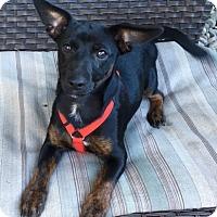Adopt A Pet :: Benny - Salem, OR