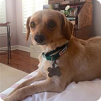 Adopt A Pet :: Josafina - Alpharetta, GA