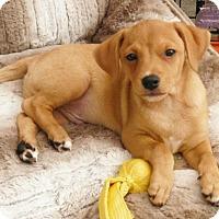 Adopt A Pet :: REX - Canton, GA