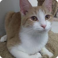 Adopt A Pet :: SAPPHIRE! - Owenboro, KY