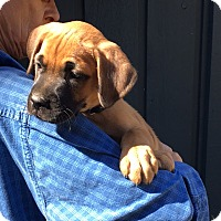 Adopt A Pet :: Tyson - one handsome boy - Pewaukee, WI