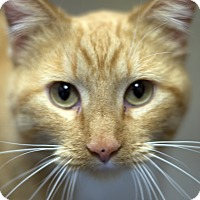 Adopt A Pet :: Peaches - Fremont, NE