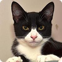 Adopt A Pet :: The Faithful Friends: Yvens, Caitlin, and Elsie - Brooklyn, NY