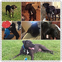 Adopt A Pet :: Hamlet - Hicksville, NY