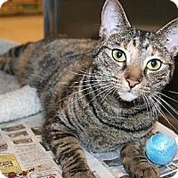 Adopt A Pet :: Roxanne - Philadelphia, PA