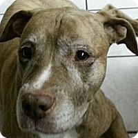 Adopt A Pet :: Wasabi - Clermont, FL