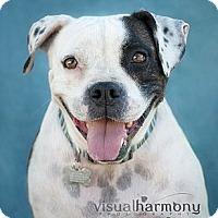 Adopt A Pet :: Maggie Mae - Phoenix, AZ