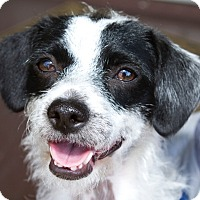 Adopt A Pet :: Frannie - Courtesy Post - Encino, CA