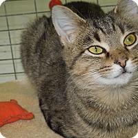 Adopt A Pet :: Kelly - Medina, OH