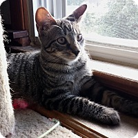 Adopt A Pet :: Murray (JT) - Little Falls, NJ